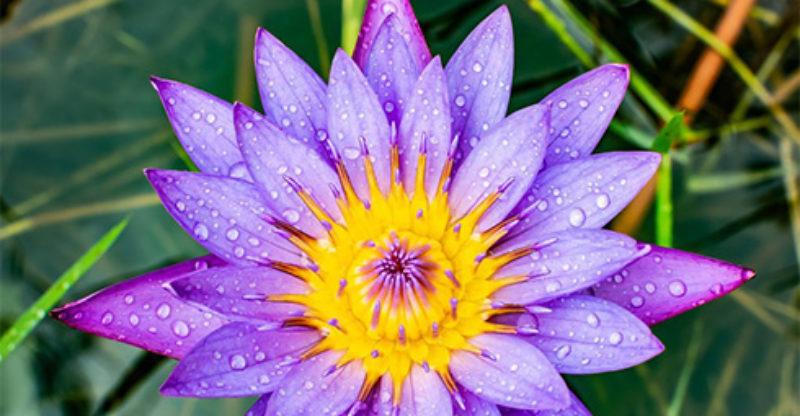 The White Lotus Florist - 155 Photos - 8 Reviews - Florist ...